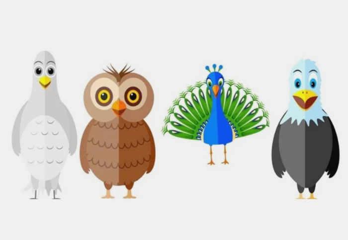 personalidade revelada com escolha de aves
