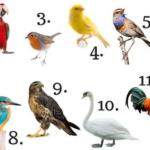 teste ave do mês