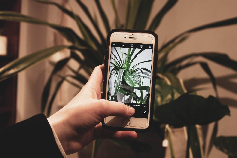 Aplicativos para identificar plantas